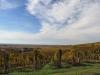 Somló-hegyi szőlők